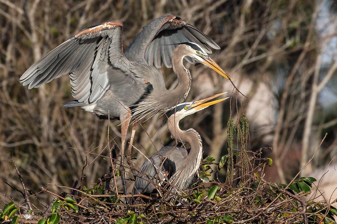 JW_D_Blue Heron Nest__00001